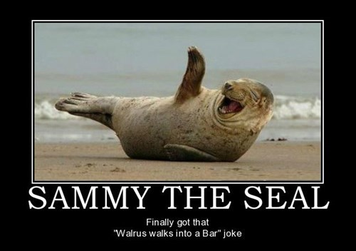 animals funny seals Sammy - 7980669952