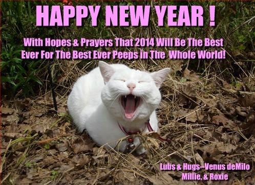 HAPPY NEW YEAR ! With Hopes & Prayers That 2014 Will Be The Best Ever For The Best Ever Peeps in The Whole World! Lubs & Hugs--Venus deMilo Millie, & Roxie