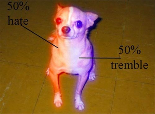 dogs hate tremble small - 7980686336