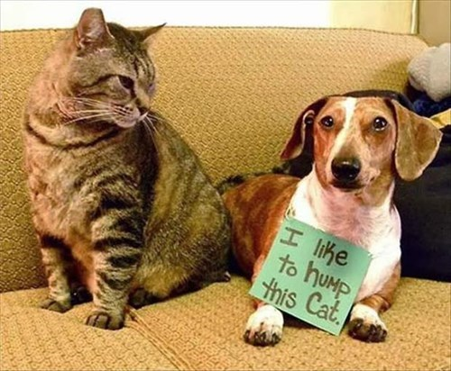 Cats dogs funny hump - 7980694528