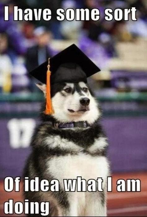 cute dogs graduate idea