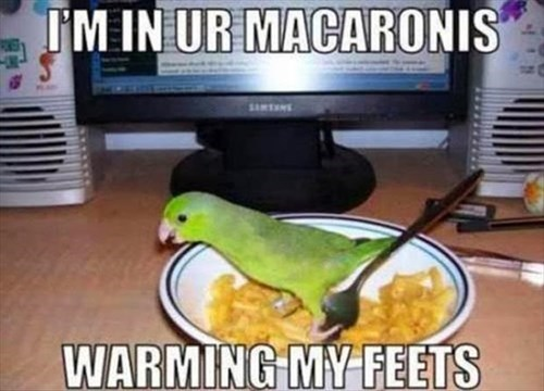 birds feet macaroni warming