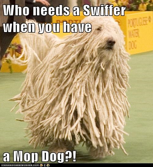 Who needs a Swiffer when you have a Mop Dog?!