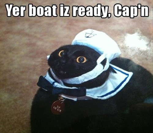 Cats funny sailor