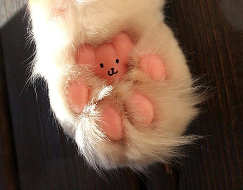 cat cute smile paws - 7981606656
