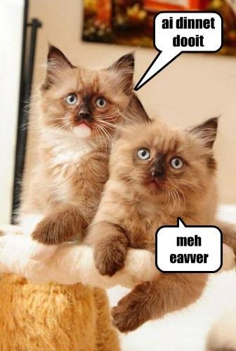 Cats blame innocent kitten - 7981952512
