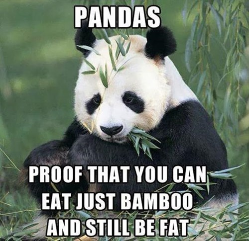 diet fat bamboo panda