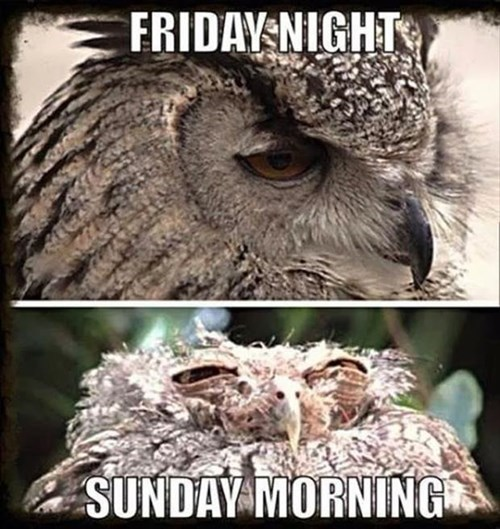 friday night weekends owls nocturnal - 7982029312