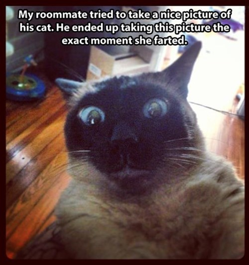 Cats,photobomb