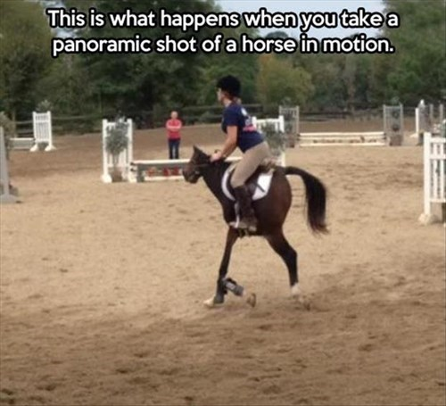 horses panorama photobomb perfectly timed - 7983278848