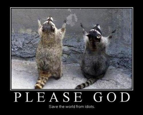prayer,funny,idiots,raccoons