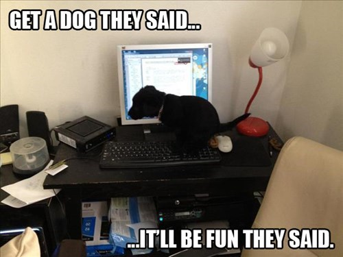 dogs computer internet poop - 7983493120