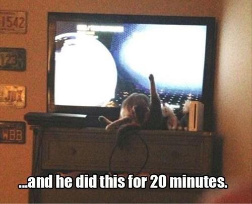 annoying Cats groom TV - 7983508736