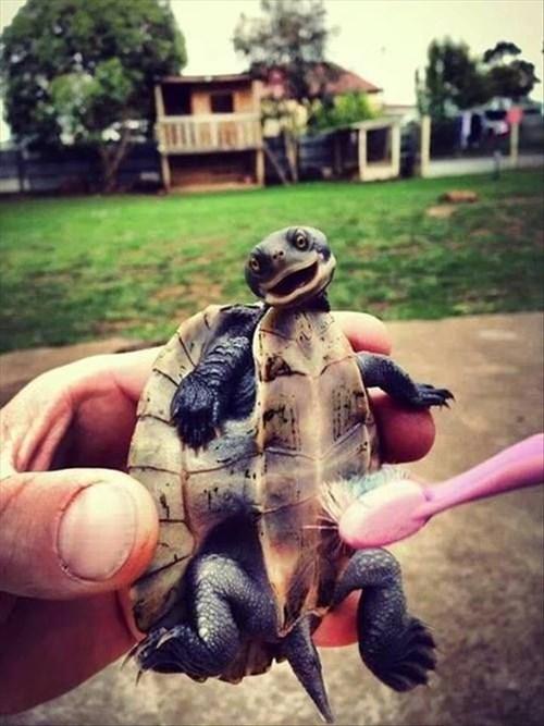 bath cute turtles tickle toothbrush - 7983539968