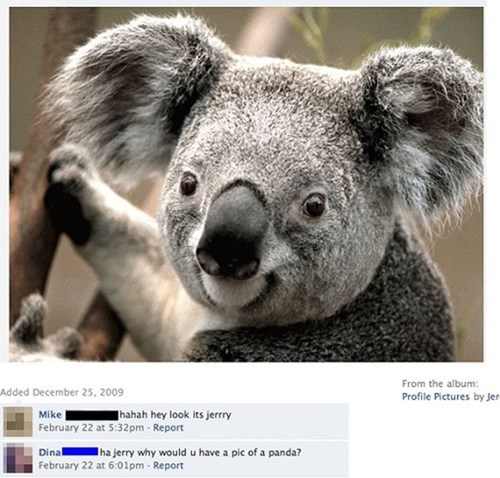koala,so close,Wrong Answer