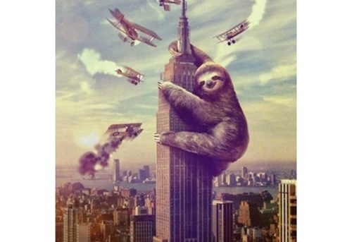 wtf king kong critters sloths - 7983820288