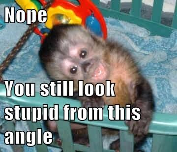 annoying stupid monkeys - 7984457216