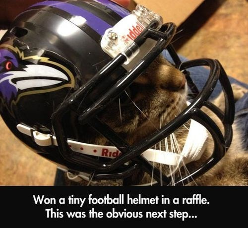 Cats animals helmets football baltimor ravens