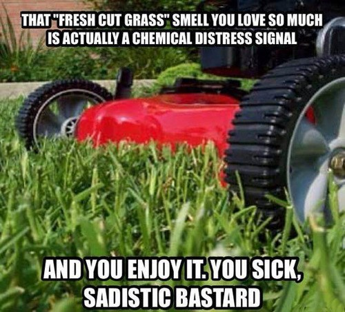 fresh cut grass lawnmowers mowing the lawn - 7984722944