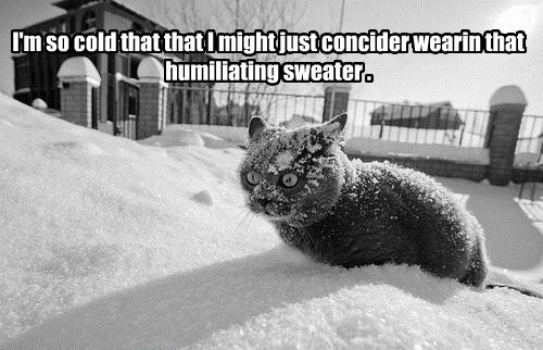 I'm so cold that that I might just concider wearin that humiliating sweater .