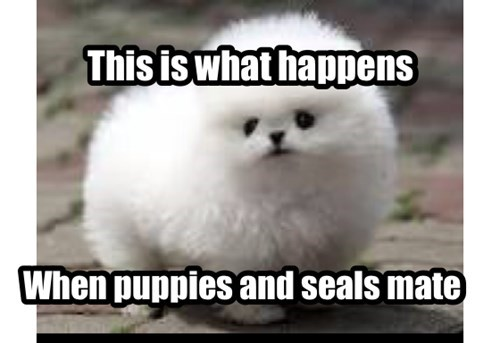 cute Fluffy puppies seals - 7985065472