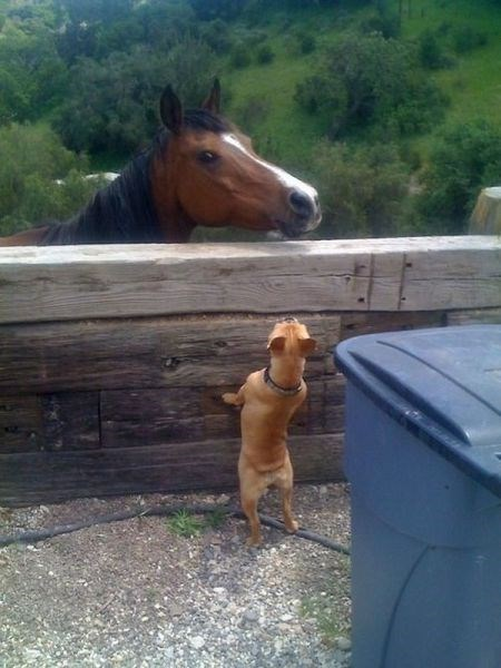 dogs horses puns - 7985084160