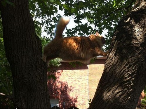Cats balance funny trees stuck - 7985085696