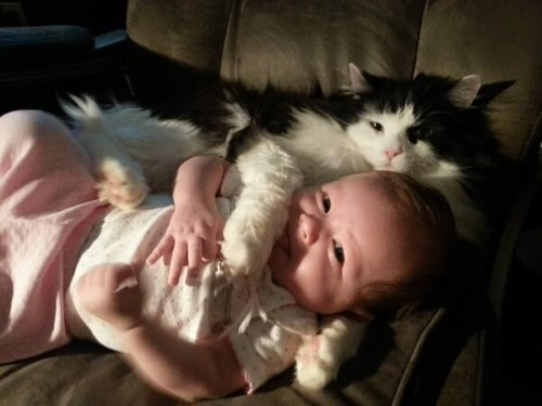 Babies Cats cute mine - 7985088256
