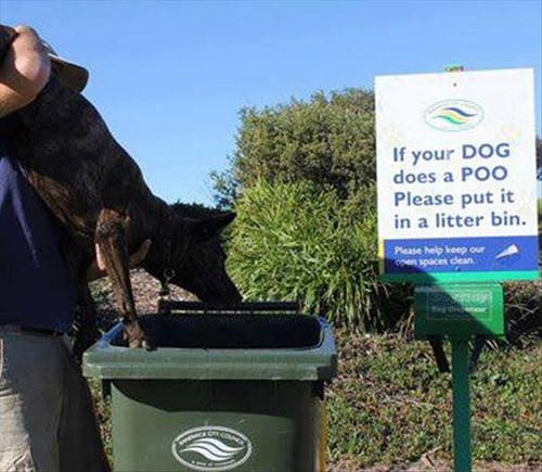 dogs,FAIL,poop,park,signs