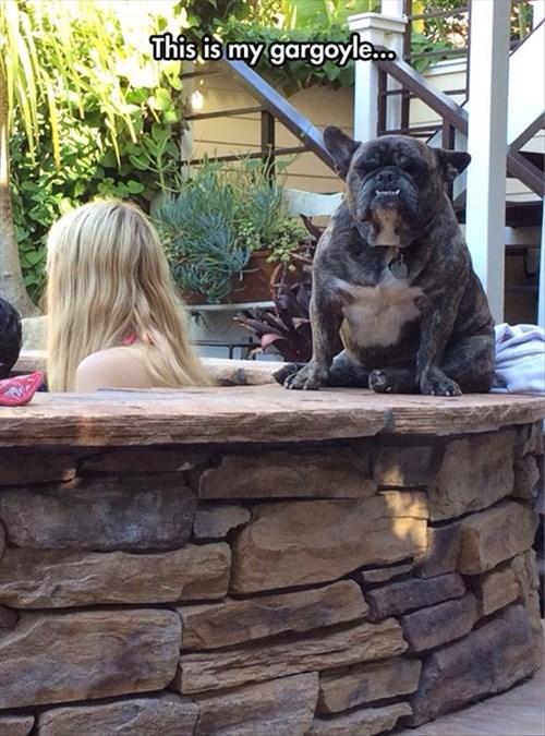 dogs,hot tub,funny,gargoyles,protect