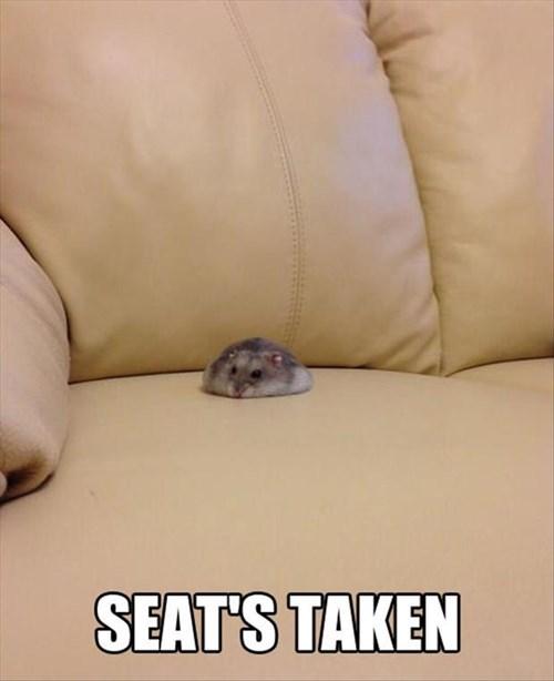 gerbils,funny,greedy,seat