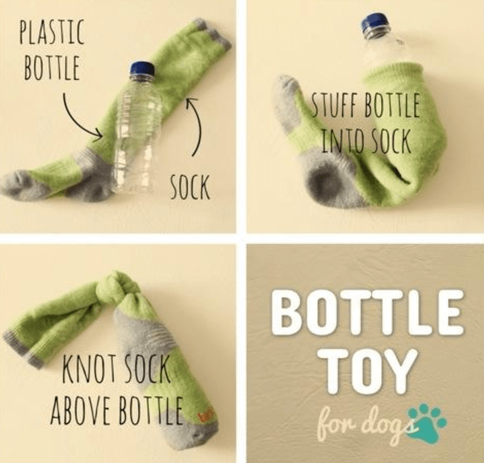 pet toys that you can do it yourself for your furry campanion
