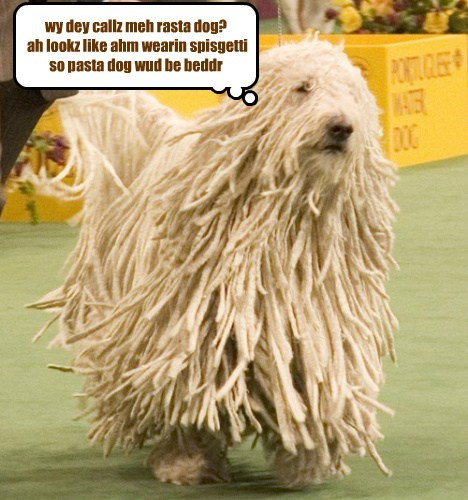 wy dey callz meh rasta dog? ah lookz like ahm wearin spisgetti so pasta dog wud be beddr