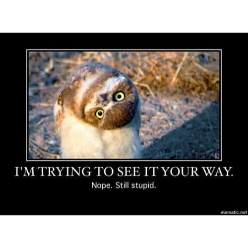 birds funny stupid owls - 7986625280