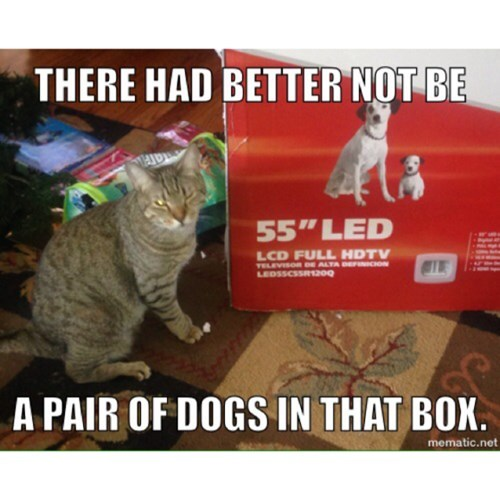 box Cats cute dogs dare - 7986627328