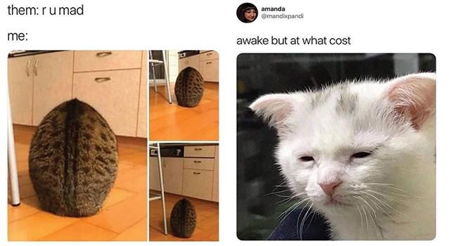funny cat memes its-caturday funny cats Caturday Cats cat memes - 7986693
