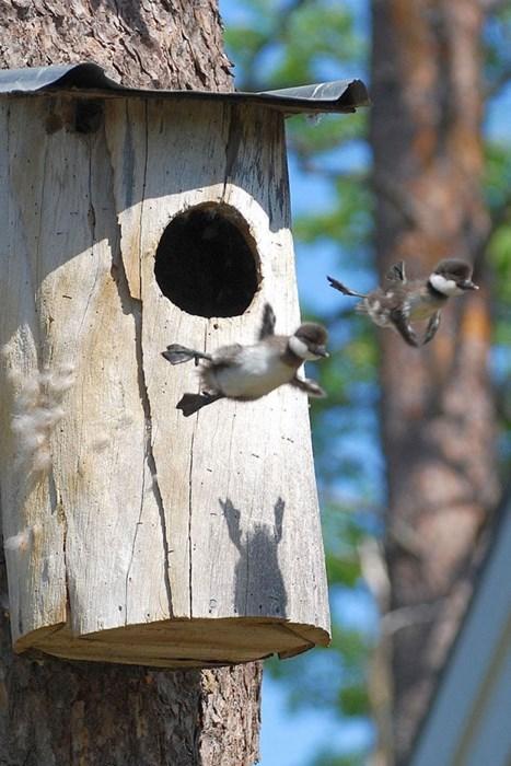 cute fly ducklings leap trees - 7986754304