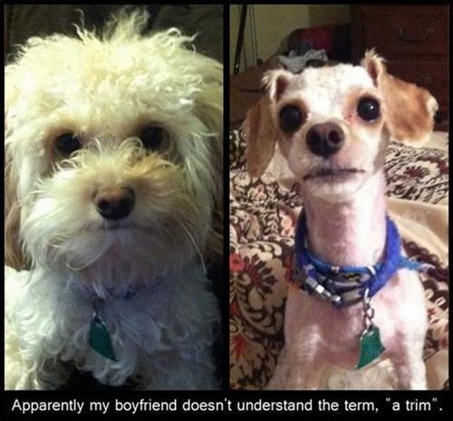 dogs,FAIL,haircut,skinny,trim