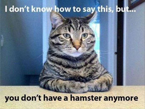 Cats,bad news,funny,hamster