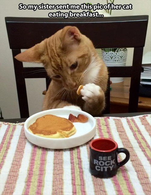 Cats breakfast funny pancakes - 7986785792