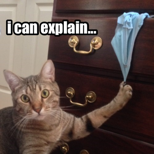 Cats busted funny underwear - 7986900736