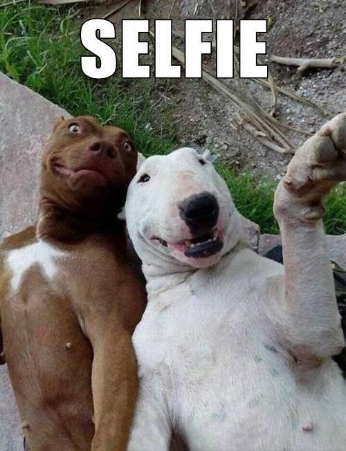 animals dogs selfie - 7987823616
