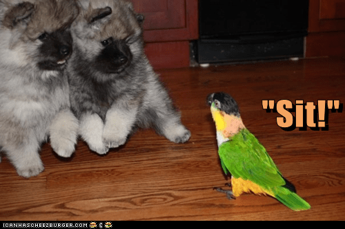 dogs,funny,mimic,obey,parrots