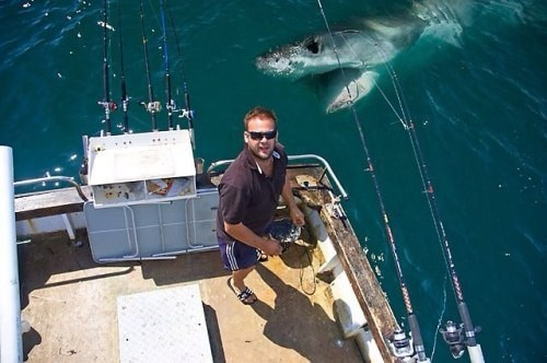 photobomb,sharks