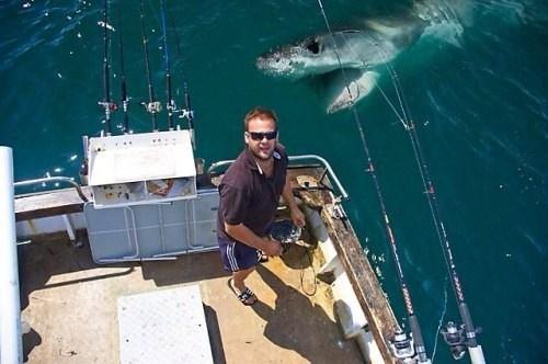 photobomb sharks - 7988220160