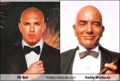 totally looks like,pit bull,daddy warbucks