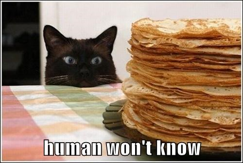 Cats,human,steal,noms
