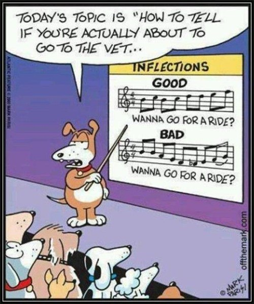 cute dogs comics vet inflection - 7988810752