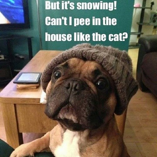 Cats,dogs,cold,snow,winter