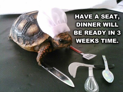 cooking,chef,turtles,slow,tortoise,dinner